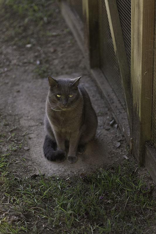 graham-the-cat-eudlo-house-sit-2018