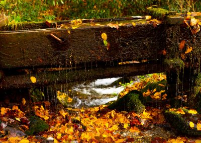 great smoky mountains fall colours travel is sweet