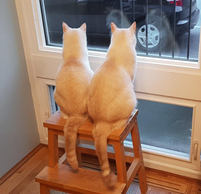 three cats ollie and sasha travel is sweet