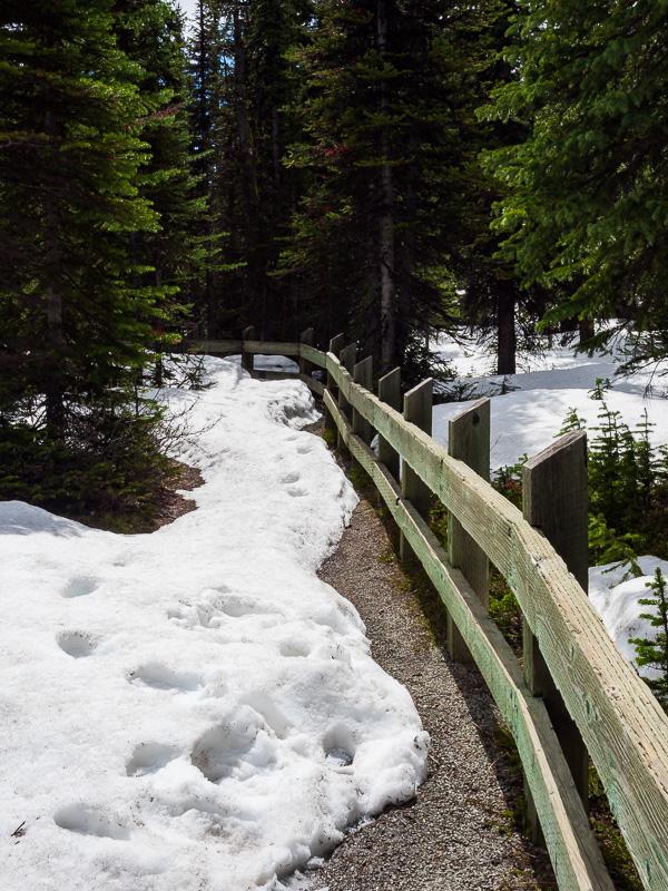 peyto lake trail travel is sweet