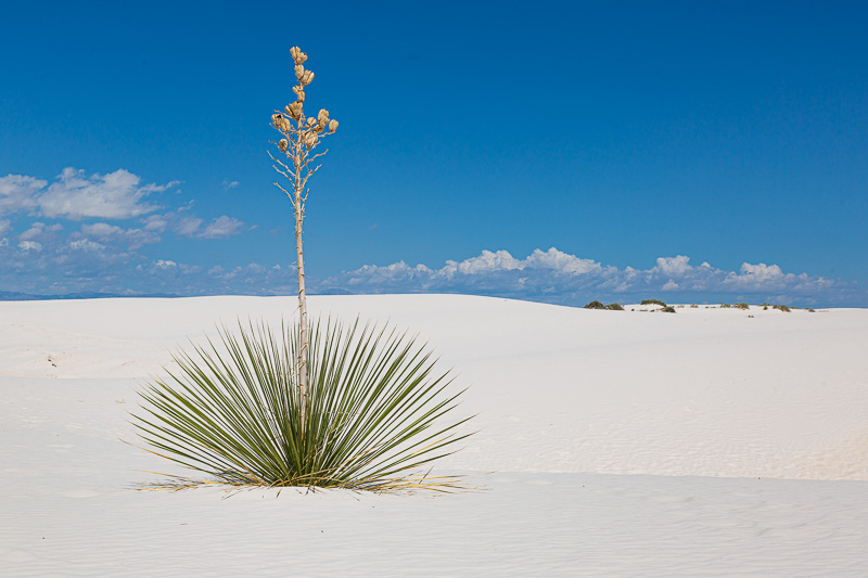 deming to roswell white sands plant travel is sweet