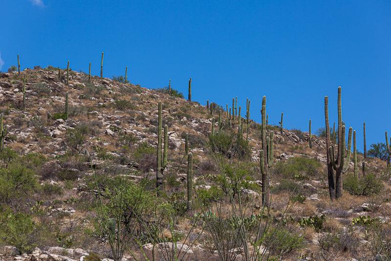 phoenix to tucson cactus travel is sweet